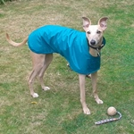 greyhound waterproof coat lightweight