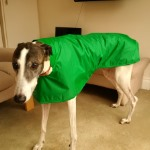 lenny in his greyhound raincoat from milgi coats