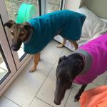 lurcher coat in teal fleece
