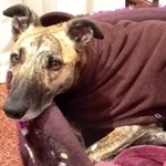 lurcher fleece coat in dark chocolate brown design