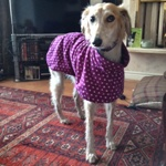 lurcher fleece coat in purple spot design