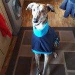 navy and turquoise greyhound fleece coat