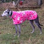 pink polar bears greyhound fleece coat