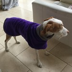 purple and charcoal fleece dog coat
