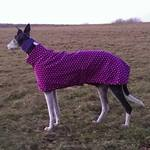 purple spot greyhound fleece coat