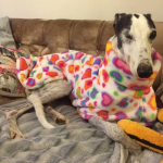 rainbow hearts cuddle fleece coat for greyhounds
