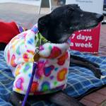 rainbow hearts cuddle fleece for greyhounds