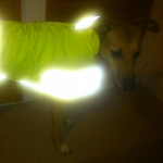 roe in her high vis coat