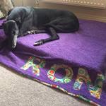 ron greyhound on his bespoke dog blanket