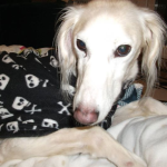 skulls fleece coat for sighthounds