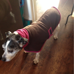 staffie dream coat from milgi coats