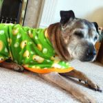 staffie fleece coat modelled by meg