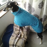teal spot greyhound fleece coat
