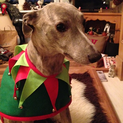 whippet elf christmas coat from milgi coats
