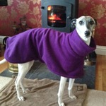 whippet fleece coat modelled by bon