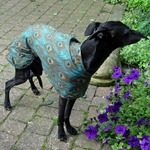 whippet coat modelled by ziggy