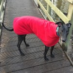 william in his red greyhound fleece coat