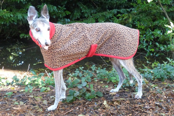 Greyhound Coat in Leopard Fleece with Red Trim
