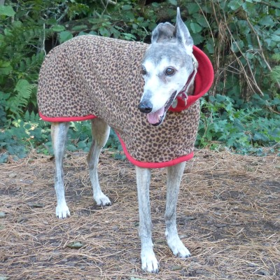 Greyhound Fleece Coat in Leopard design with Red Trim
