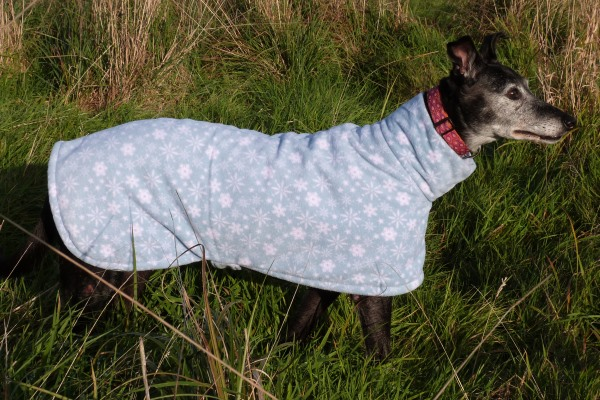 greyhound coat in blue snowflakes design