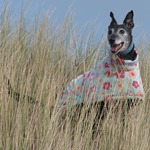 greyhound coat lurcher coat whippet coat in daisy dreams fleece