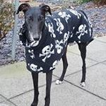 greyhound coat modelled by haitchi