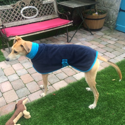 greyhound coat navy and turquoise