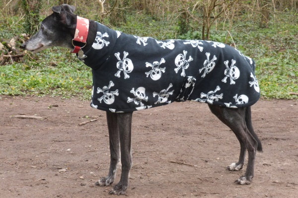 greyhound fleece coat in skull and bones design