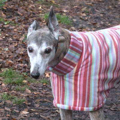 greyhound fleece coat in raspberry stripes pattern