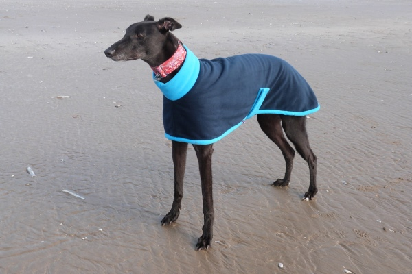 navy with turquoise greyhound fleece coat