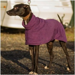 Onyx in his greyhound coat