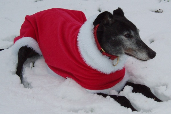 Christmas fleece coat for greyhounds lurchers and whippets