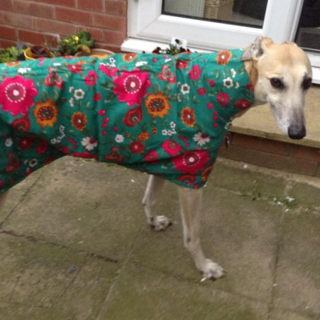 bespoke greyhound walking out coat in jade floral