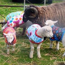 lamb coats from milgi coats