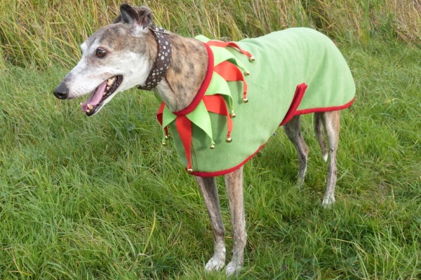 greyhound coat in christmas elf