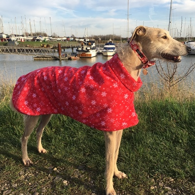 peggy wearing snowflakes lurcher fleece coat