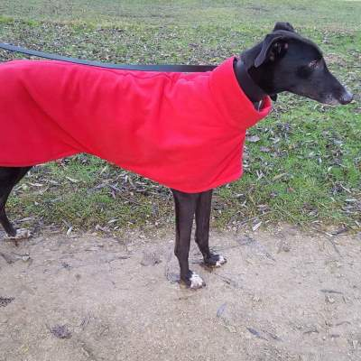 Bright Red Greyhound Coat Worn By Bruno