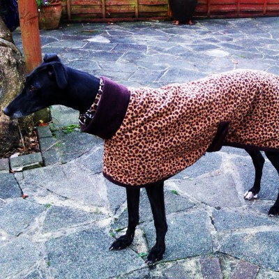 Pearl in her Leopard Print Greyhound Coat
