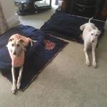 dog fleece blankets from milgi coats modelled by tess and peggy