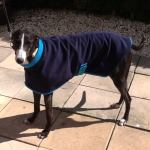 greyhound coat modelled by woody