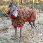 greyhound fleece coat in leopard design modelled by jenna