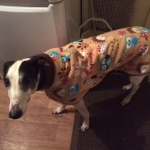 Holly wearing a woodland creatures greyhound fleece coat