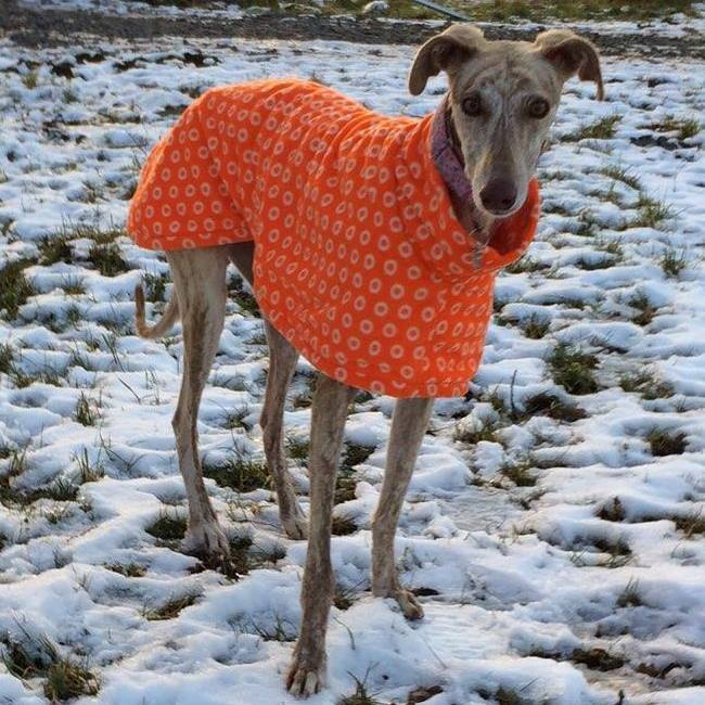 chande galgo cosmic orange fleece coat