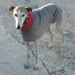 galgo fleece coat worn by eddie