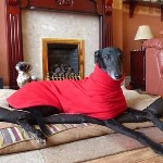 gerry wearing a red greyhound fleece coat