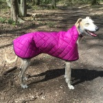 peggy lurcher wearing a cerise pink quilted lurcher coat