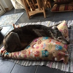woodland creatures dog bed for greyhounds
