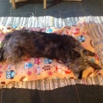 woodland creatures dog bed for lurchers