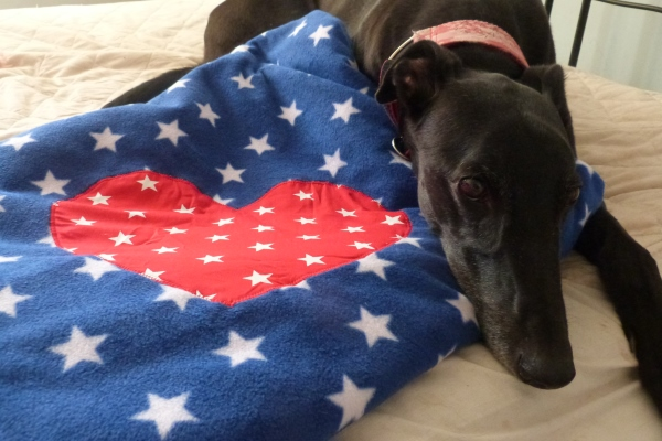 blue and red stars dog blanket jack