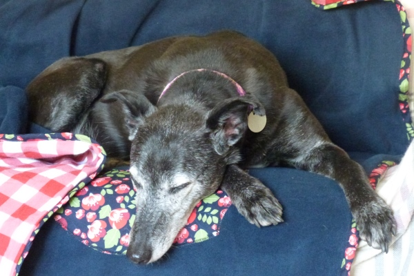 sofa throw and dog blanket in navy floral design showing sleeping lurcher